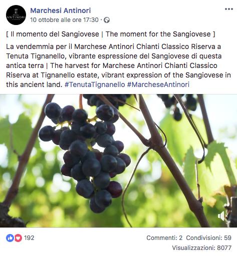 Vendemmia Marchesi Antinori pagina facebook
